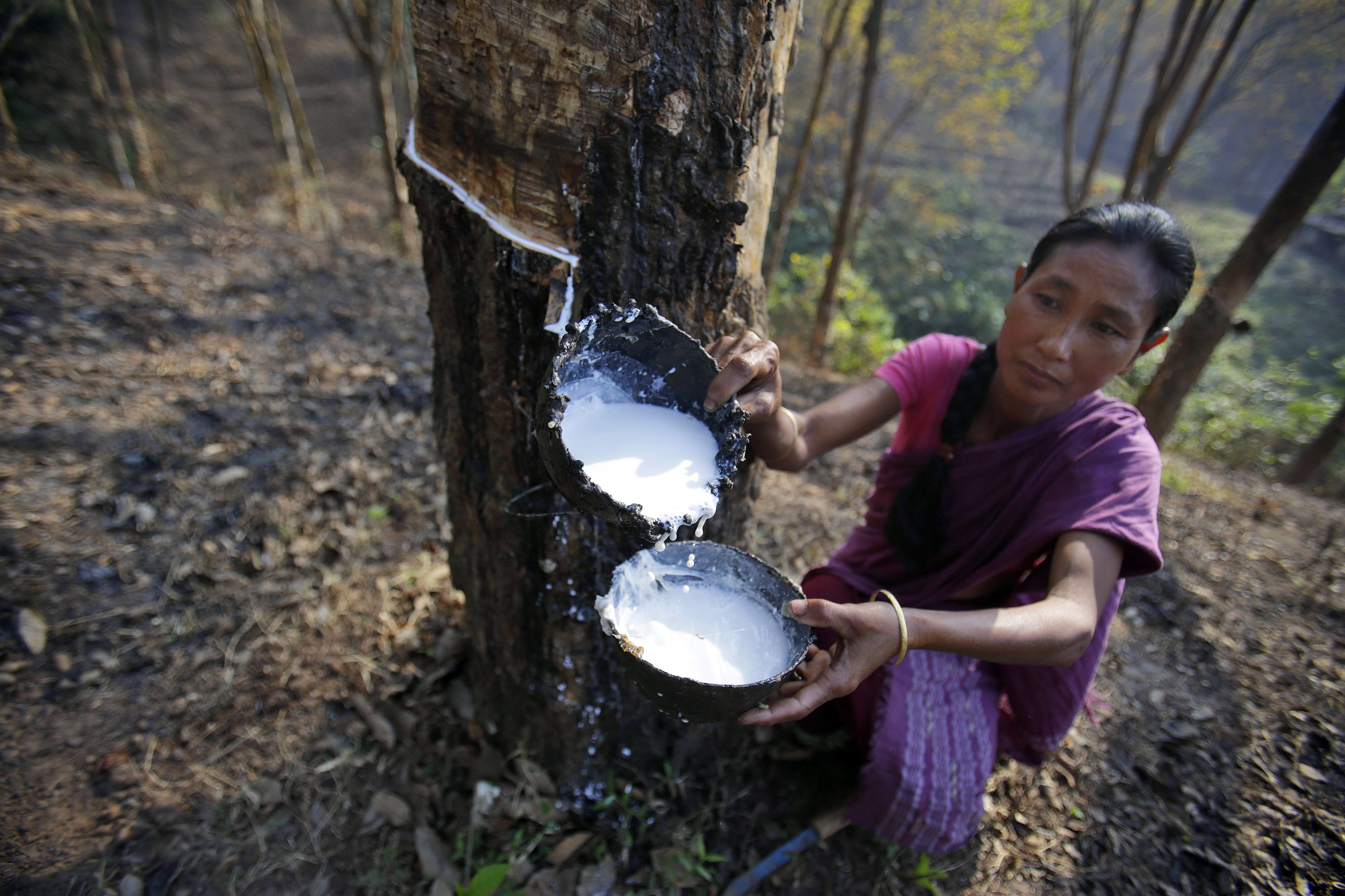 Daily wage laborer Jina Boro, 35, collects latex tapped from a rubber tree at a rubber farm in Hatikhuli village, about 35 kilometers (22 miles) east of Gauhati, India, Friday, March 7, 2014. International Women's Day will be marked on March 8. (AP Photo/Anupam Nath)