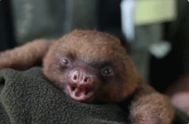 8 stages of sleep deprivation,as told by baby animals