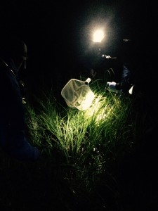 Volunteers scan the small streams at Bryant's Fork looking for toads. Boreal toads are most active at night. (Nate Brown)