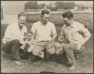 Three male BYU students play with Cleo and Tarbo. BYU initially had two real cougars as mascots. (L. Tom Perry Special Collection)
