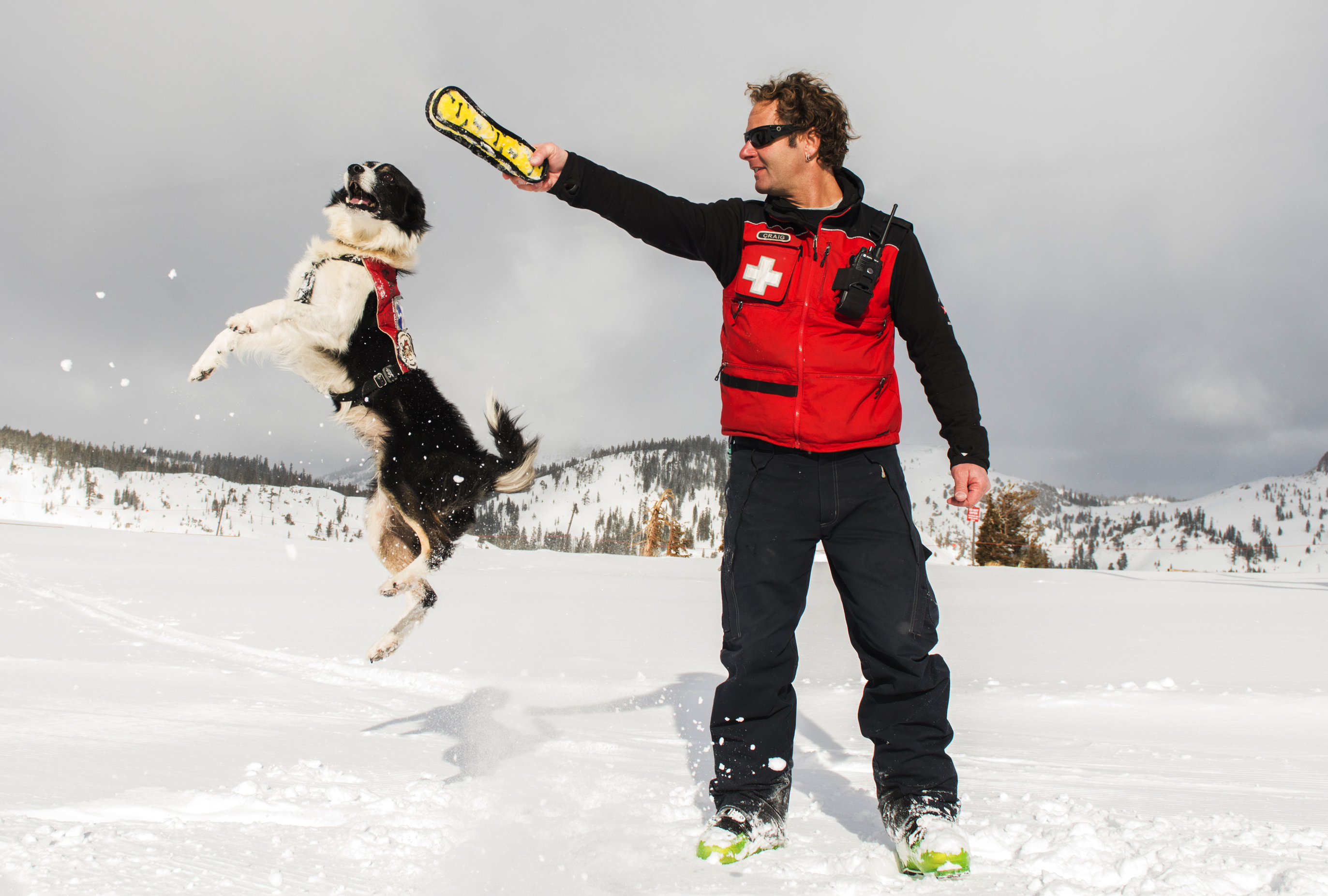 when an avalanche hits the slopes let the dogs out the daily in this 2015 photo provided by squaw valley alpine meadows dog supervisor craig noble puts