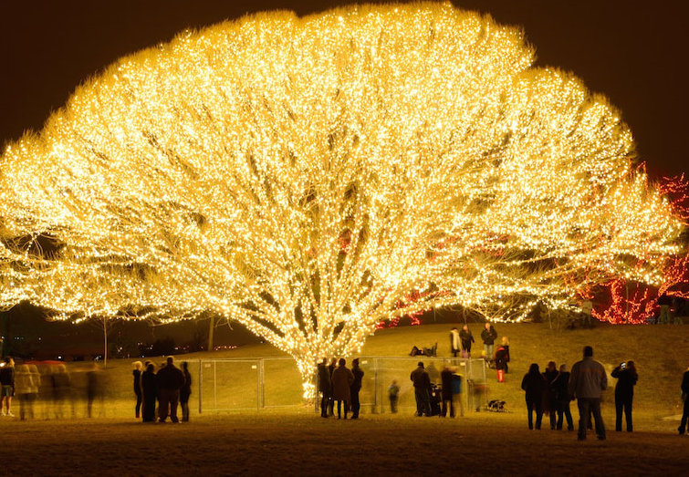 brite nites used more than 1000 strands of lights for the draper tree of life the lights for this tree alone cost upwards of 25000