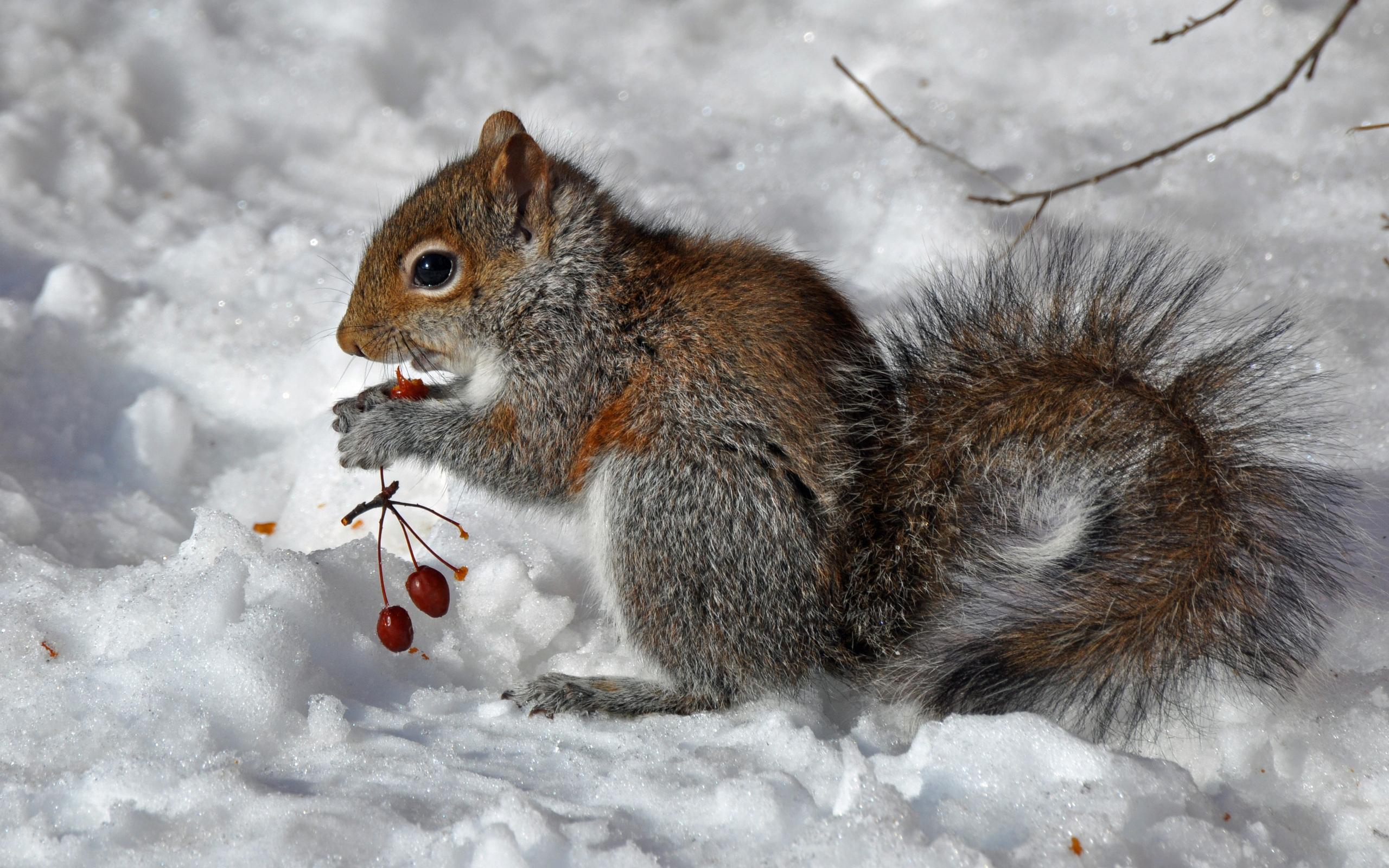 Squirrel appreciation day 8 facts about squirrels the for Foto inverno per desktop