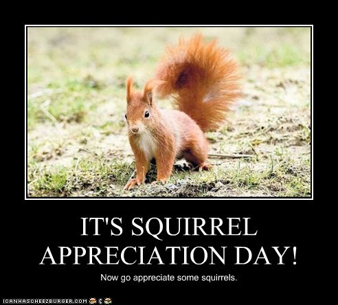 Image courtesy of squirrel world.