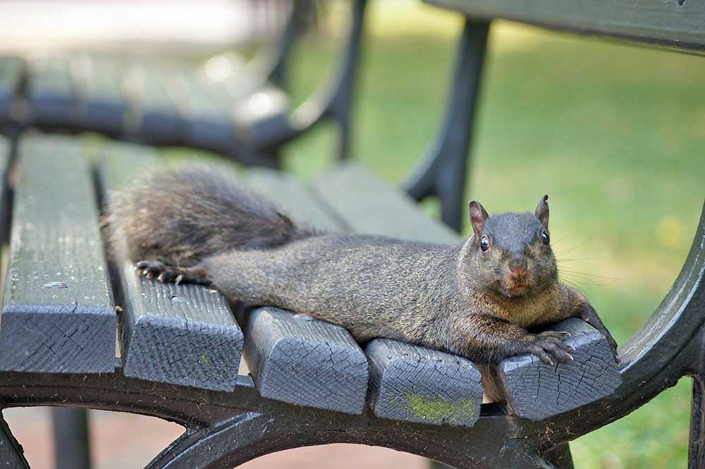 Squirrel Appreciation Day 8 Facts About Squirrels The