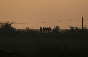 A group of migrants at dawn heading to cross a border line between Serbia and Hungary, near the village of Horgos, Serbia, Saturday, Aug. 29, 2015. (AP Photo/Darko Vojinovic)