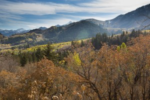 Provo Canyon is a great place to watch birds of prey migrate this Fall. (Samantha Williams.)