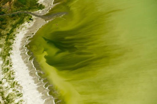 FILE - This July 14, 2016, file photo, shows discolored water caused by an algae bloom near the Lindon Marina in Utah Lake in Lindon, Utah. A huge toxic algal bloom in Utah has closed one of the largest freshwater lakes west of the Mississippi River, sickening more than 100 people and leaving farmers scrambling for clean water. The bacteria commonly known as blue-green algae has spread rapidly to cover almost all of 150-square-mile Utah Lake, turning the water a bright, anti-freeze green and leaving scummy foam along the shore. (Rick Egan/The Salt Lake Tribune via AP, File)
