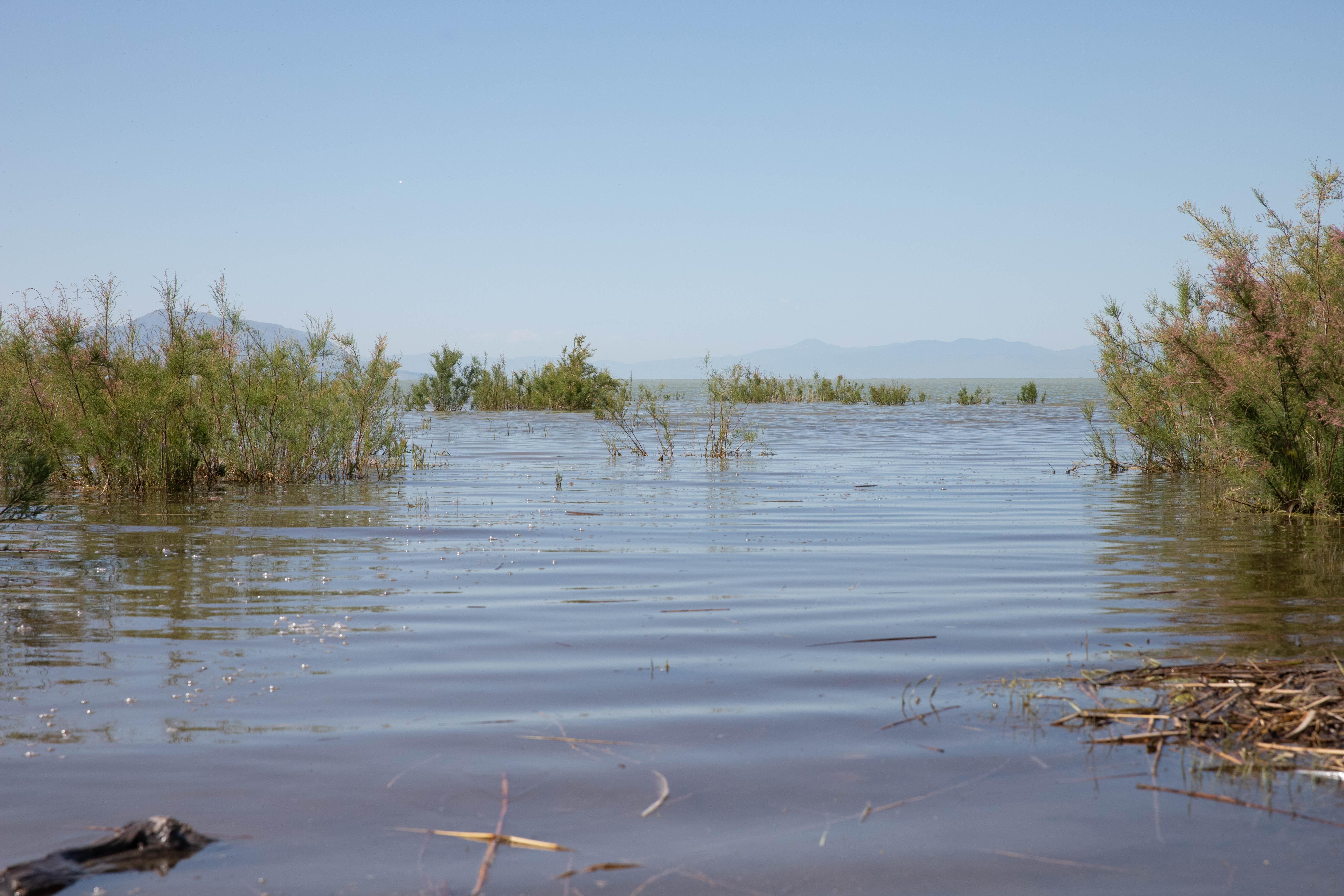Utah Lake Commission works on solving algal blooms