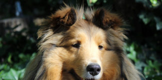 Utah Pet Partners